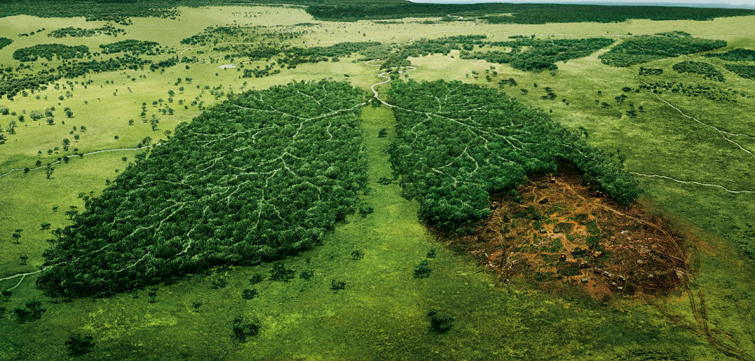 Deforestation time are changing post